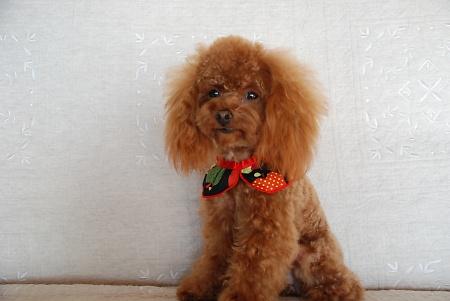 Dog lover stationery gift. Mike Sibley Poodle Letter Opener